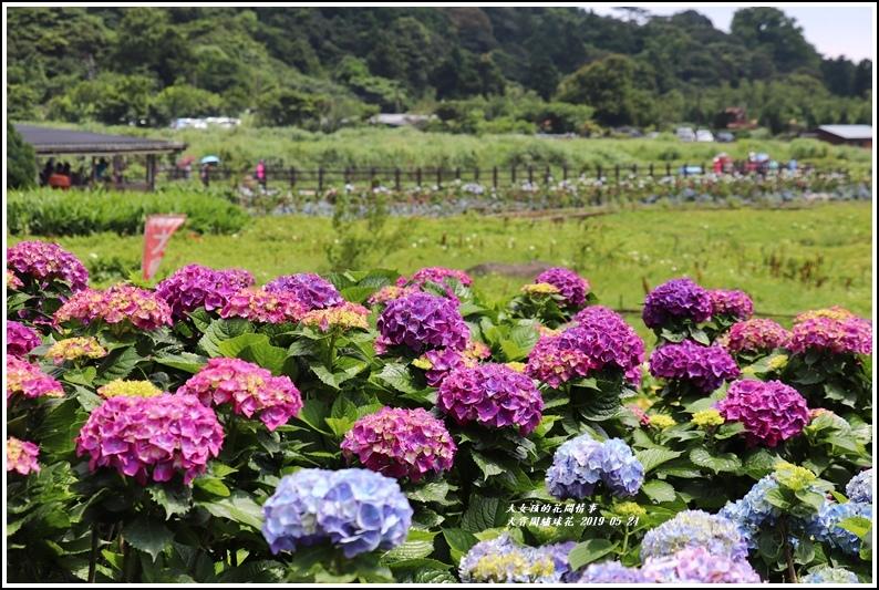 大賞園繡球花(竹子湖)-2019-05-11.jpg