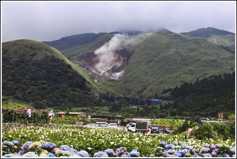 大賞園繡球花(竹子湖)-2019-05-14.jpg