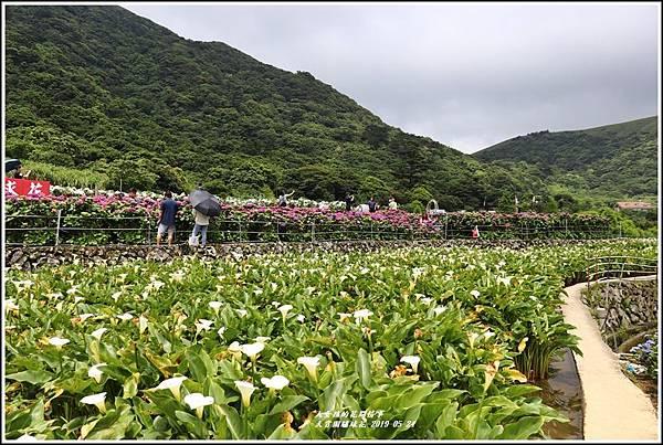 大賞園繡球花(竹子湖)-2019-05-17.jpg