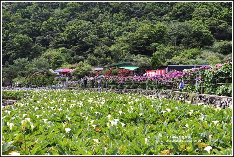 大賞園繡球花(竹子湖)-2019-05-20.jpg