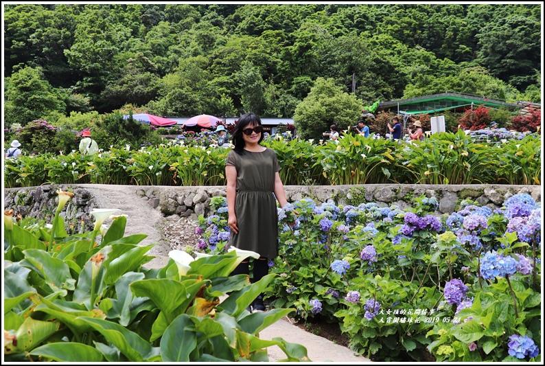大賞園繡球花(竹子湖)-2019-05-24.jpg