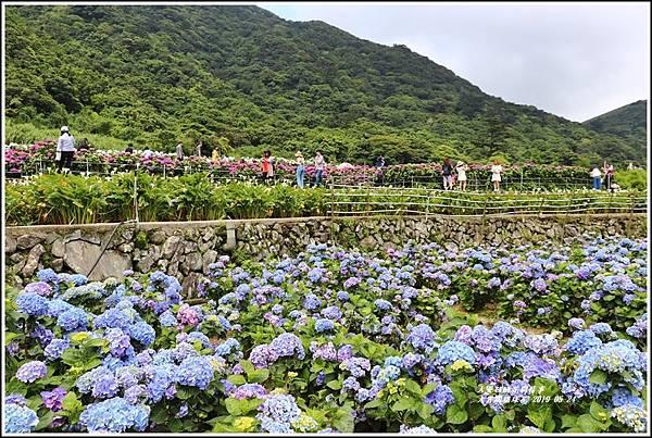 大賞園繡球花(竹子湖)-2019-05-25.jpg