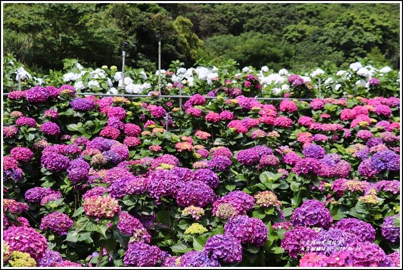 大賞園繡球花(竹子湖)-2019-05-28.jpg