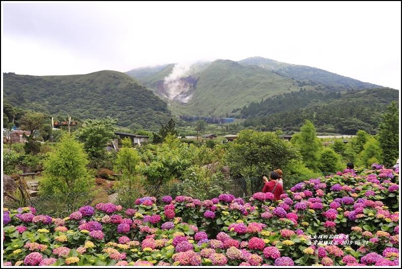 大賞園繡球花(竹子湖)-2019-05-40.jpg