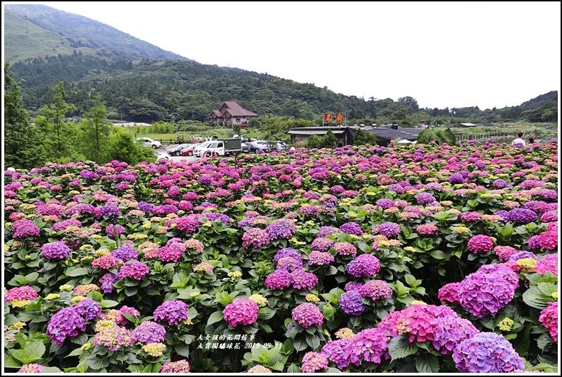 大賞園繡球花(竹子湖)-2019-05-41.jpg