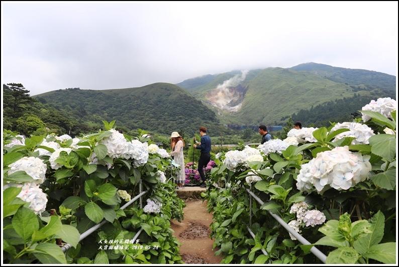 大賞園繡球花(竹子湖)-2019-05-42.jpg