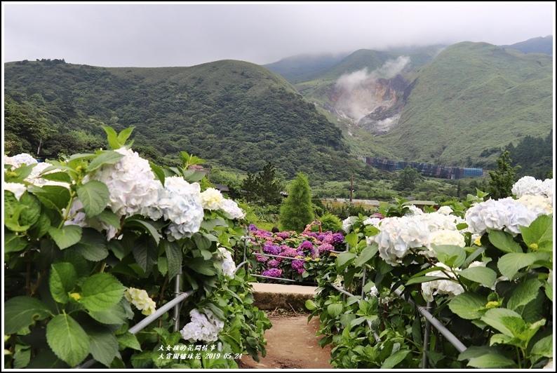 大賞園繡球花(竹子湖)-2019-05-43.jpg