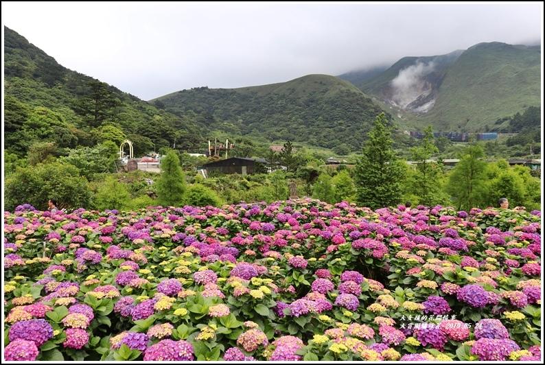 大賞園繡球花(竹子湖)-2019-05-45.jpg