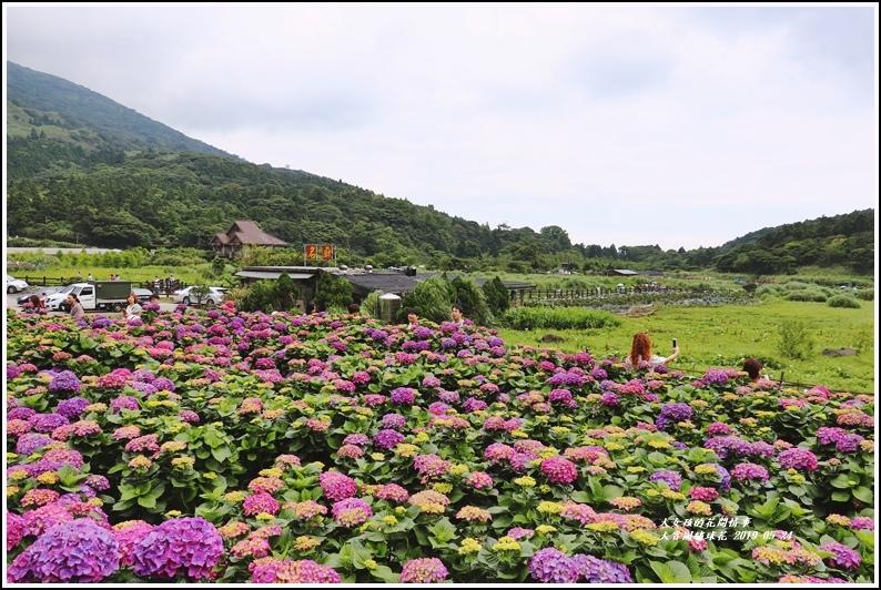 大賞園繡球花(竹子湖)-2019-05-46.jpg