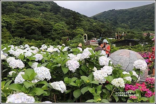 大賞園繡球花(竹子湖)-2019-05-48.jpg