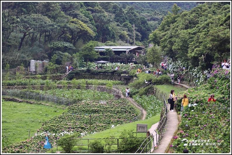大賞園繡球花(竹子湖)-2019-05-55.jpg
