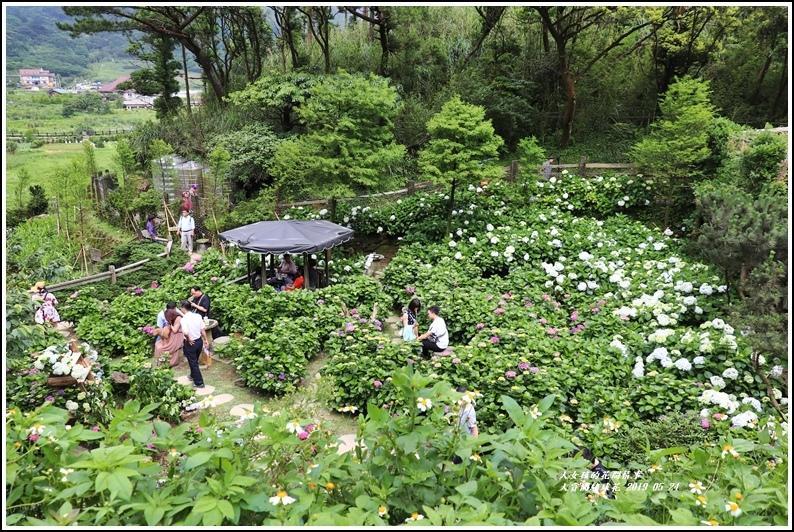大賞園繡球花(竹子湖)-2019-05-57.jpg