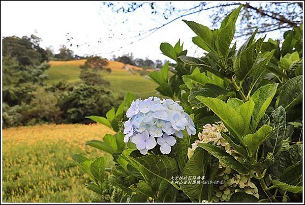 赤柯山山區-2019-08-02.jpg