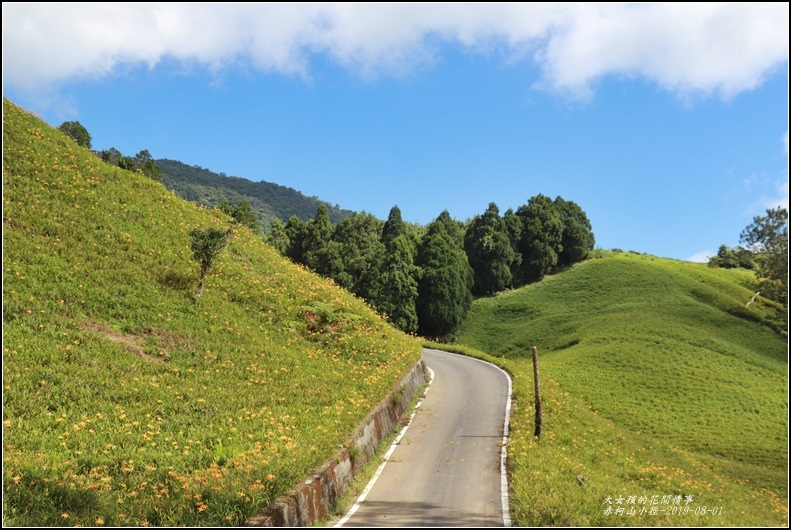 赤柯山小徑-2019-08-05.jpg