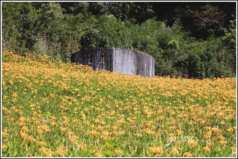 赤柯山小瑞士農場-2019-08-10.jpg