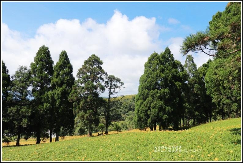 赤柯山小瑞士農場-2019-08-14.jpg