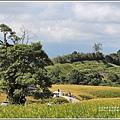 赤柯山小瑞士農場-2019-08-19.jpg