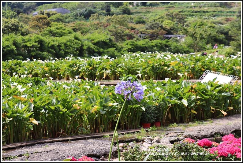 竹子湖高家繡球花(第二園區)-2019-05-03.jpg