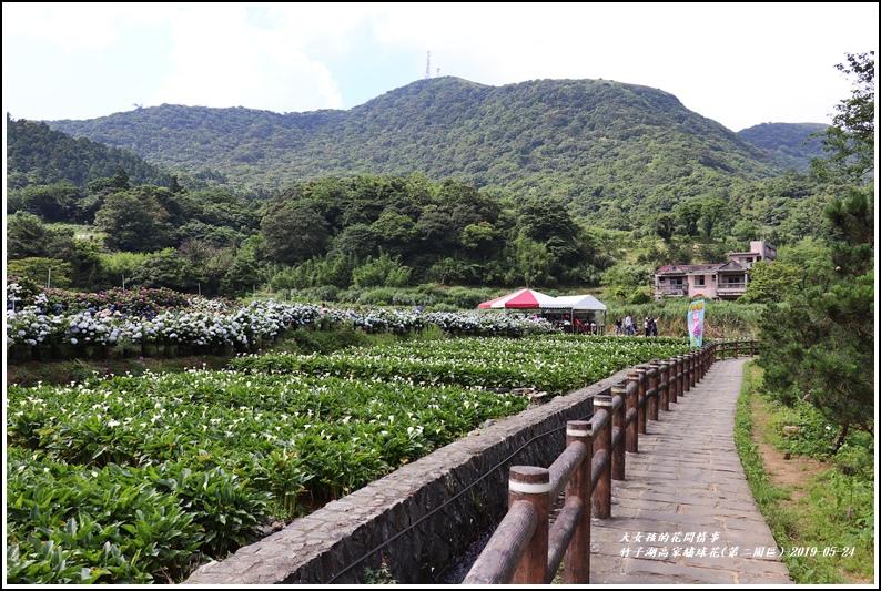 竹子湖高家繡球花(第二園區)-2019-05-04.jpg