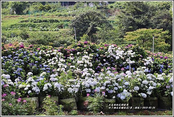 竹子湖高家繡球花(第二園區)-2019-05-05.jpg