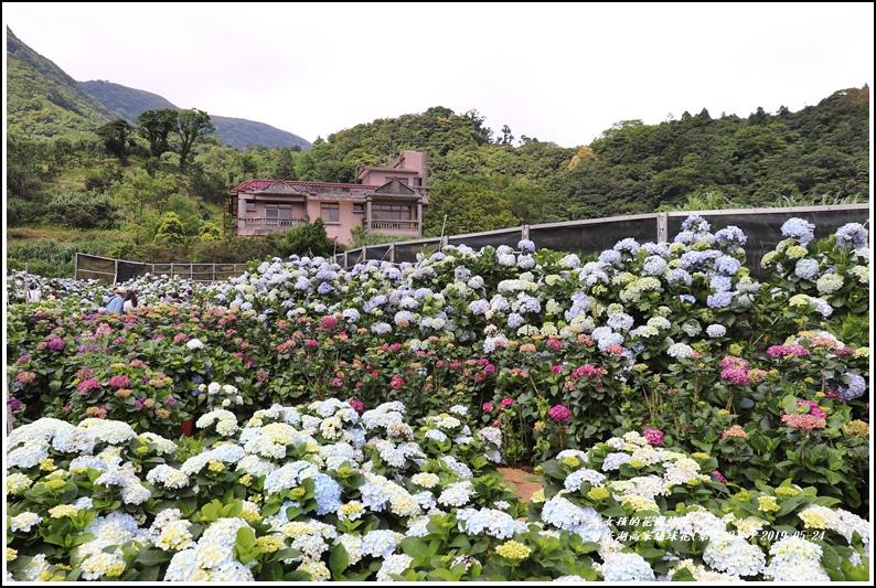 竹子湖高家繡球花(第二園區)-2019-05-06.jpg