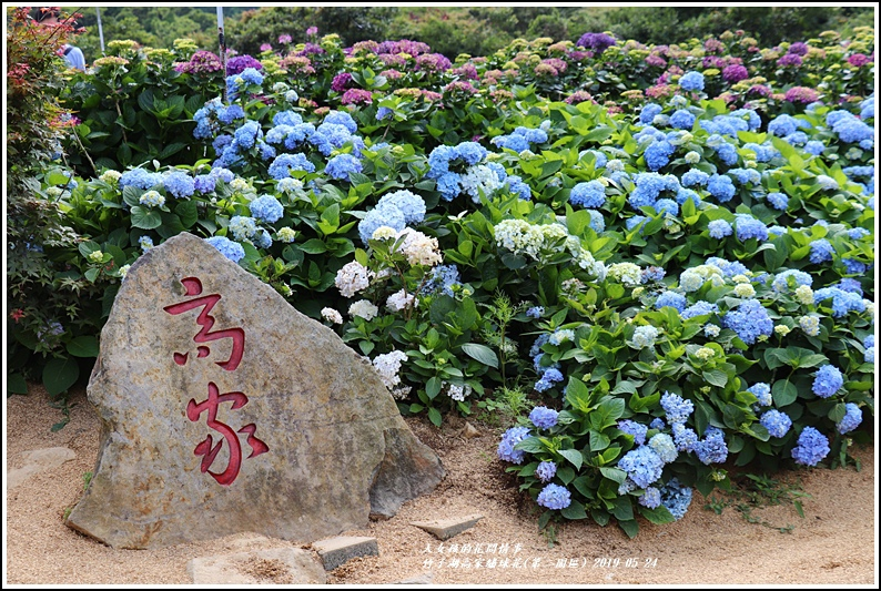 竹子湖高家繡球花(第二園區)-2019-05-07.jpg