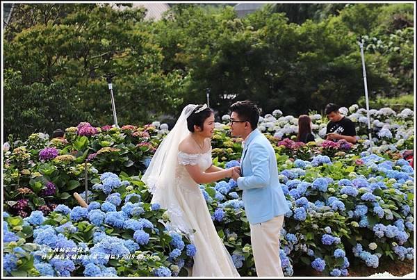 竹子湖高家繡球花(第二園區)-2019-05-08.jpg
