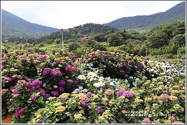 竹子湖高家繡球花(第二園區)-2019-05-10.jpg