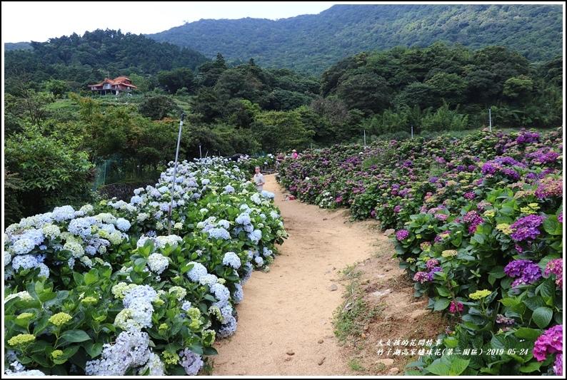 竹子湖高家繡球花(第二園區)-2019-05-16.jpg
