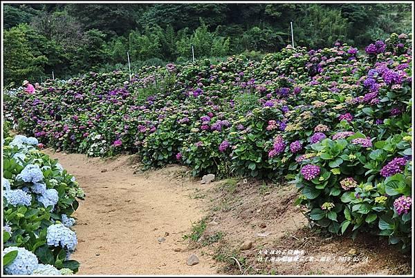竹子湖高家繡球花(第二園區)-2019-05-17.jpg