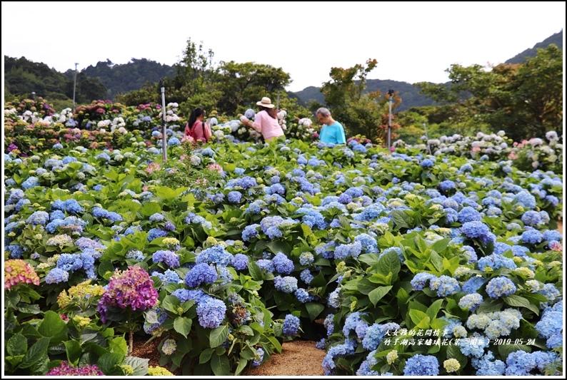 竹子湖高家繡球花(第二園區)-2019-05-20.jpg