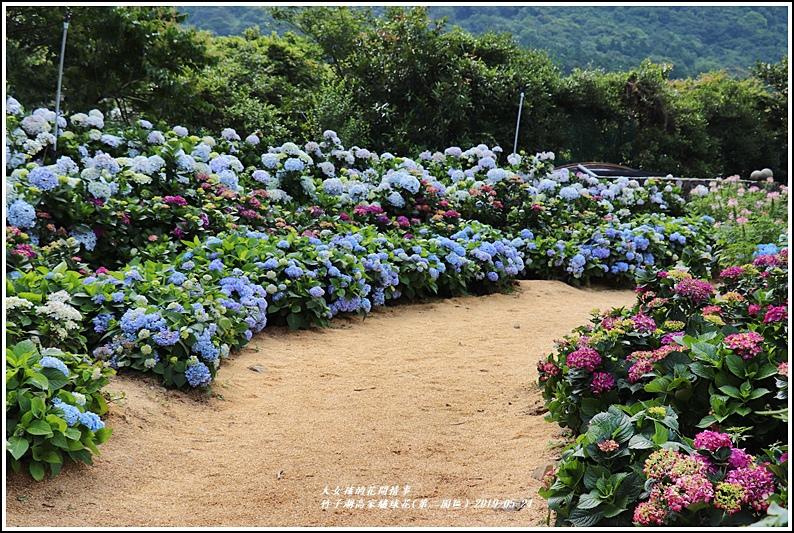 竹子湖高家繡球花(第二園區)-2019-05-21.jpg