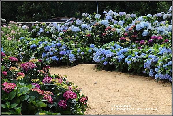 竹子湖高家繡球花(第二園區)-2019-05-22.jpg