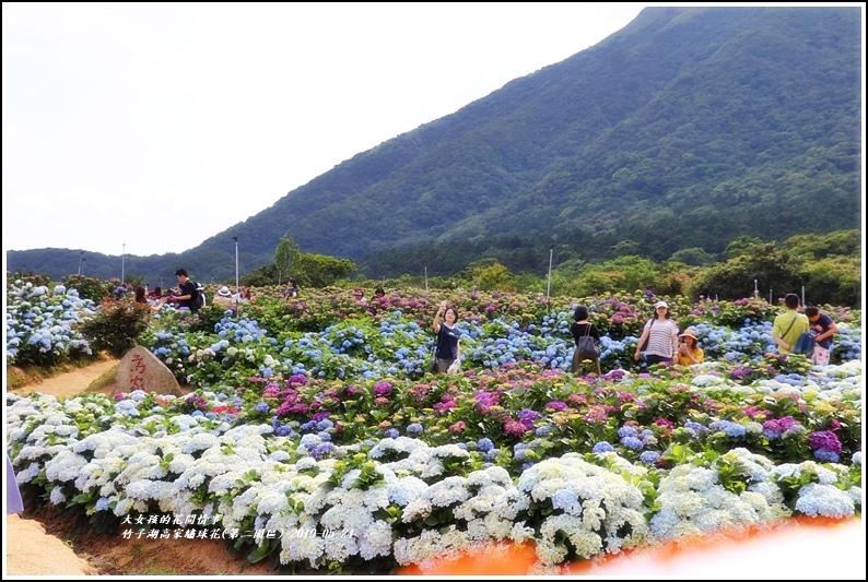 竹子湖高家繡球花(第二園區)-2019-05-26.jpg