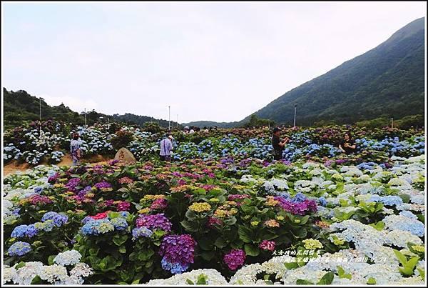 竹子湖高家繡球花(第二園區)-2019-05-30.jpg