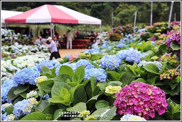 竹子湖高家繡球花(第二園區)-2019-05-31.jpg