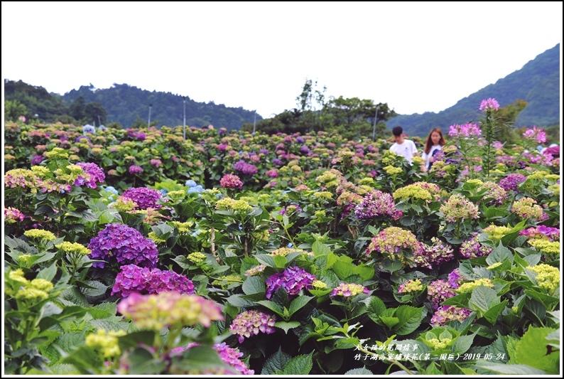 竹子湖高家繡球花(第二園區)-2019-05-32.jpg