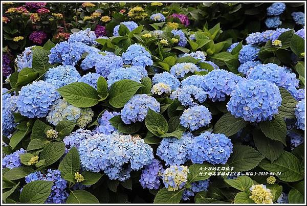 竹子湖高家繡球花(第二園區)-2019-05-33.jpg