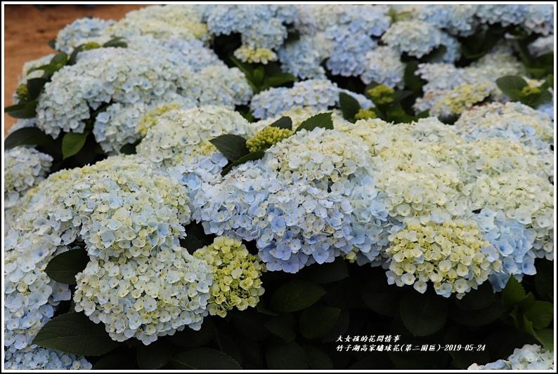 竹子湖高家繡球花(第二園區)-2019-05-34.jpg