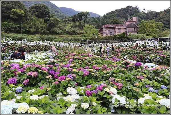 竹子湖高家繡球花(第二園區)-2019-05-36.jpg
