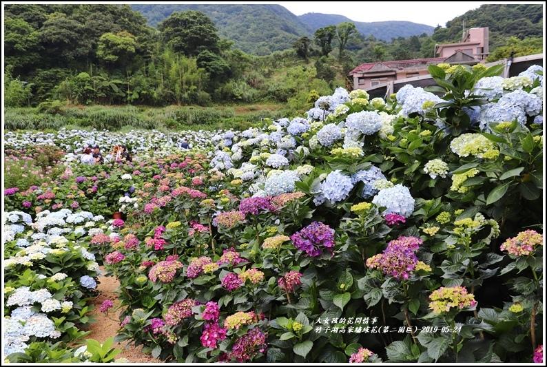 竹子湖高家繡球花(第二園區)-2019-05-39.jpg