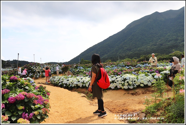 竹子湖高家繡球花(第二園區)-2019-05-44.jpg