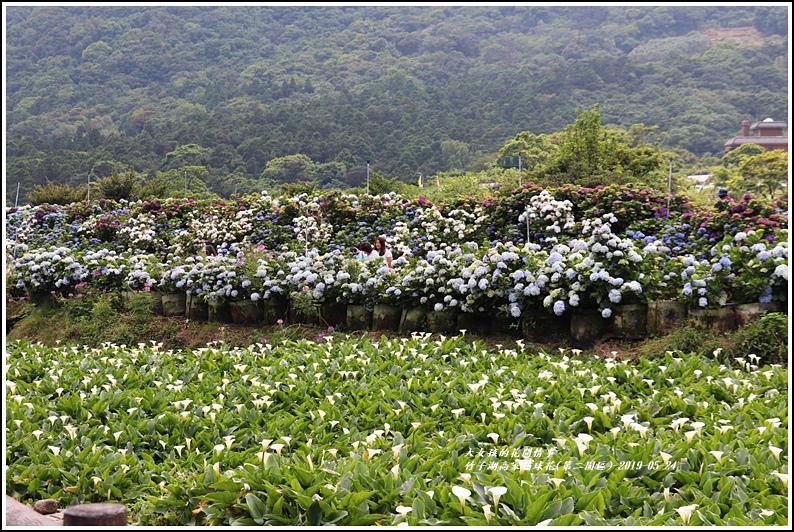竹子湖高家繡球花(第二園區)-2019-05-51.jpg