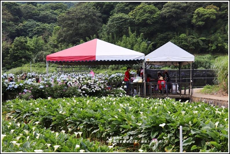 竹子湖高家繡球花(第二園區)-2019-05-52.jpg