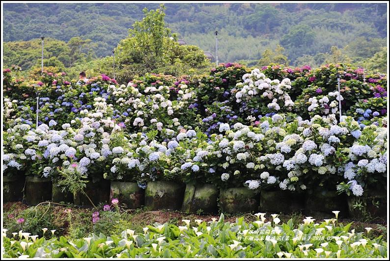 竹子湖高家繡球花(第二園區)-2019-05-53.jpg