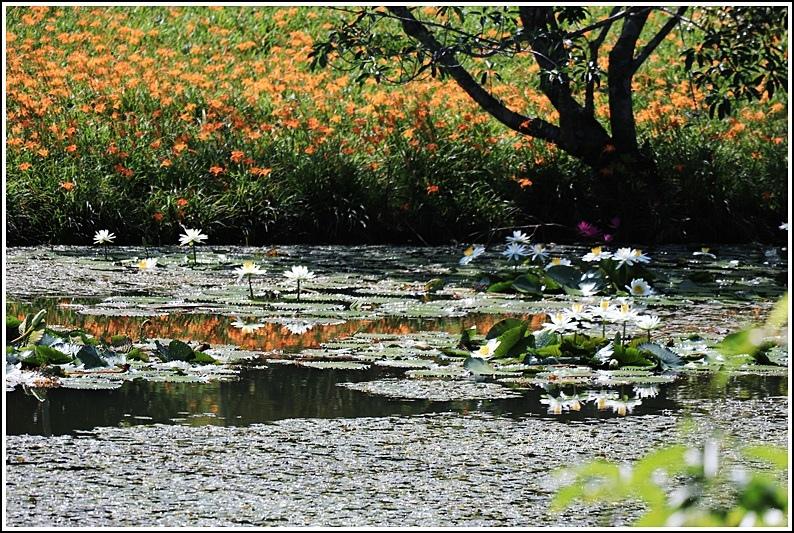 竹林湖-2019-09-10.jpg