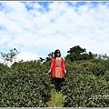 竹林湖-2019-09-68.jpg