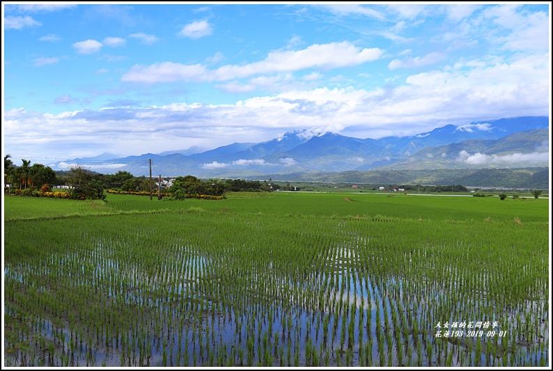 花蓮193青秧-2019-09-01.jpg