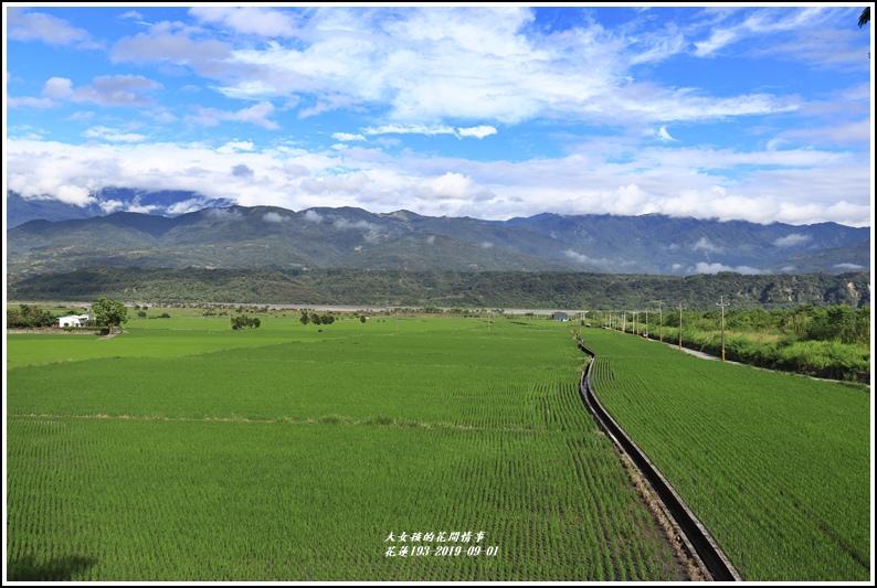 花蓮193青秧-2019-09-11.jpg