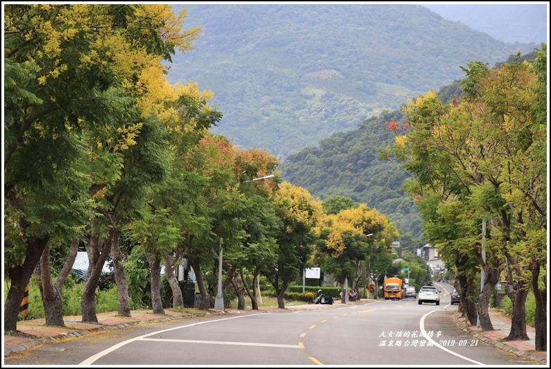 瑞穗溫泉路台灣欒樹-2019-09-11.jpg